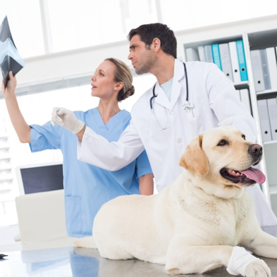 Veterinary Assistant college course subjects